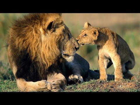 La caza ilegal arrasa con la fauna silvestre de África