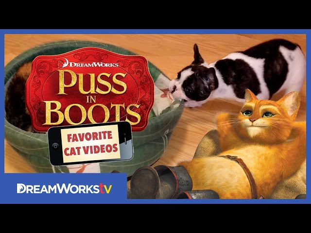 Puppy Tries to Reclaim Bed   PUSS IN BOOTS FAVORITE CAT VIDEOS