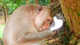 MG- Funny King Monkey Mark To Show In Mirror | Video Funny King Monkey Mark