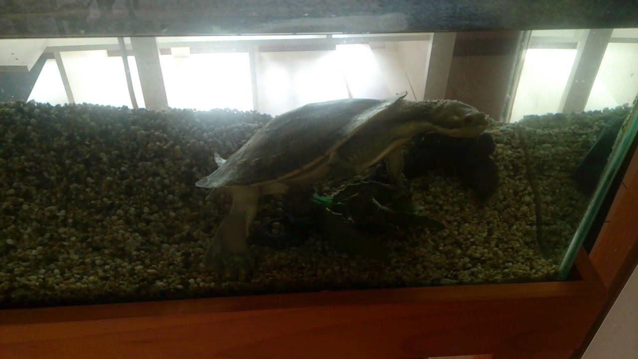 R Turtles Lucky Lucky short next turtl...