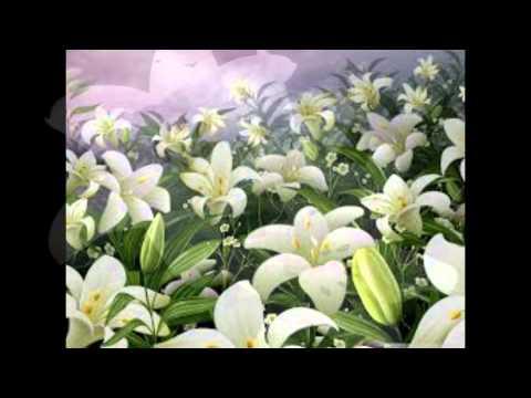 las flores de lirio 2