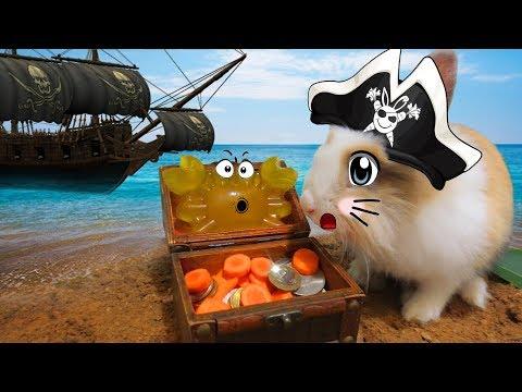 Пираты Карибского Моря 5 : БАФФИ И КРАБС ! Канал про Животных ! Видео для детей