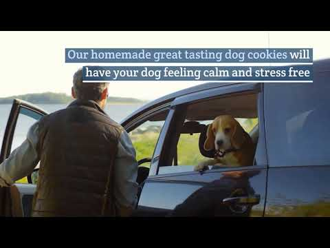 Download Lagu Medication For Dog Anxiety.mp3