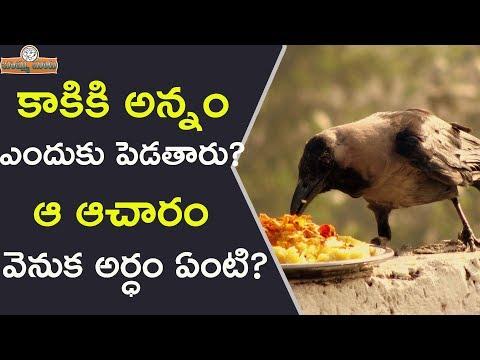 కాకికి అన్నం ఎందుకు పెడతారు? ఆ ఆచారం వెనుక అర్ధంఏంటి | Significance Of Feeding Crows In Hindu Dharma