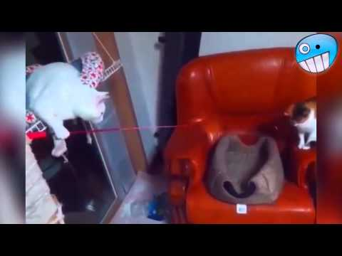 Funny Videos 2015   Funny Fails   Funny Cat Video   Funny Cats   Funny Vines   Funny Animals