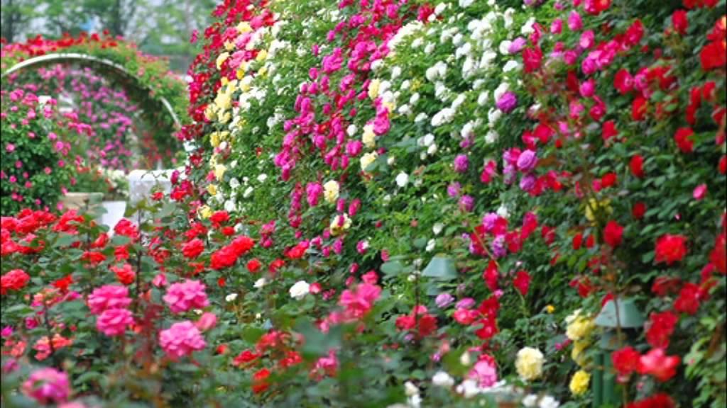 Цветы записи в рубрике цветы дневник elena_privalova : livei.