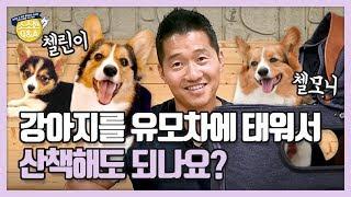 강아지를 유모차에 태워서 산책해도 되나요?|강형욱의 소소한 Q&A