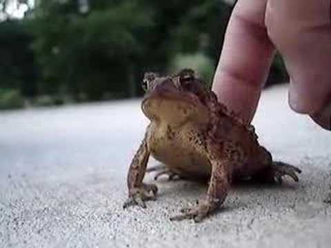Toad Scratching