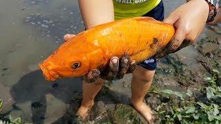 Trò Chơi Đi Bắt Cá Dưới Ao ❤ ChiChi ToysReview TV ❤ Đồ Chơi Trẻ Em Baby Fish