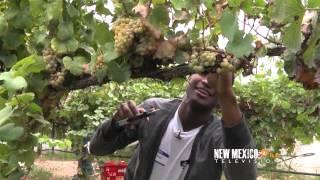 NM True TV - Fort Selden Grape Harvest