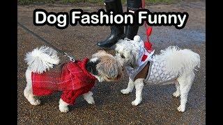 Dog Fashion Funny Video | Funny Dog Videos | Funny Pets