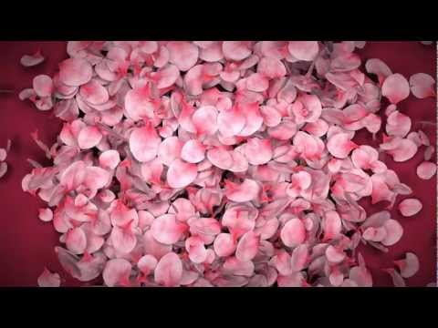 Falling Flower Petals Ae Template video