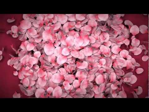 Falling Flower Petals Ae Template video