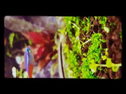 Planted tank.aquasacpe mother nature . Jewel tank