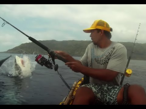 Its a routine kayak fishing adventure for Isaac Brumaghim, until Chompy the shark shows up. Kayak: Ocean Kayak Ultra 4.7 Reel: PENN Torque Spinner Rod: PENN ...