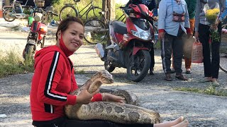 The girl caught the big Python - The girl is not afraid of Snakes - Cobra Channel