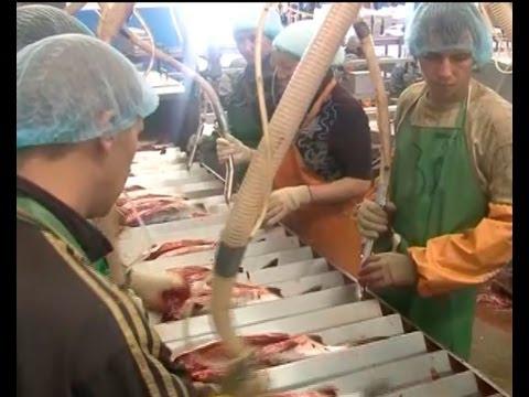Сибирское кадровое агентство обмануло рабочих, приехавших на сахалинскую путину.