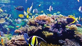 S.E.A. Aquarium, Sentosa, Singapore