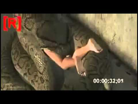 Hot Fuuny Video Snake Eating A Women video