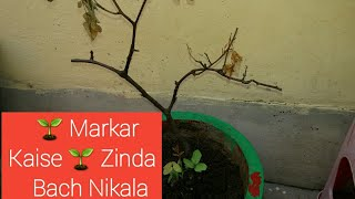 Apka BISHWAS & CARE Plants ko Zinda rakhega // Dying Plant care Tips.