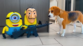 Dogs Vs Minion Prank : Funny Dogs Louie and Marie Ep13