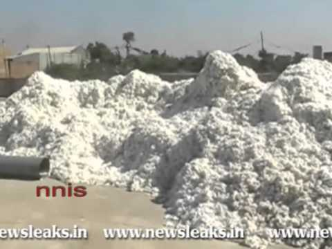 GOM TO REVIEW EXPORT BAN ON COTTON.flv