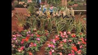 Plantas veracruzanas, opción para las madres en su día