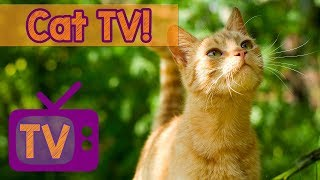 TV For Cats! With Relaxing Music, Bird Watching For Your Cat! Nature Footage Video For Cats - NEW