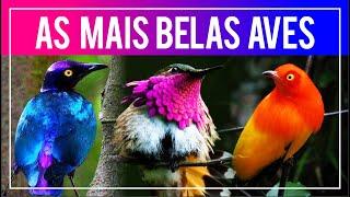 As aves MAIS BONITAS do mundo!