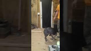 The dog trick