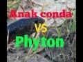 World 39 S Giant Snake Anaconda Found In Amazon Rain Forest   Python Snake Attacks  Giant Anaconda
