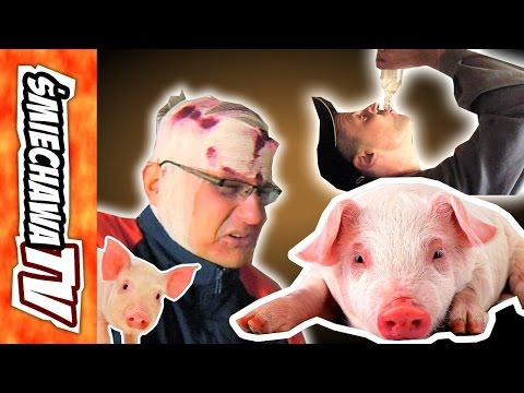 Świnie 2 u Szwagra Video Dowcip
