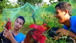 जङ्गलको कुखुरा छोप्ने तरिका  | बन कुखुरा को शिकार | hunting jungle hen with trap