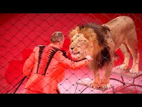 Тигры запашных