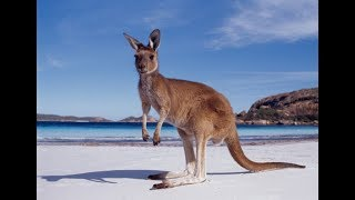 Swedish Man Goes Undercover In Australia
