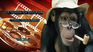 приколы обезьяны