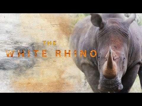 Armoured Giants : Africa's White Rhino