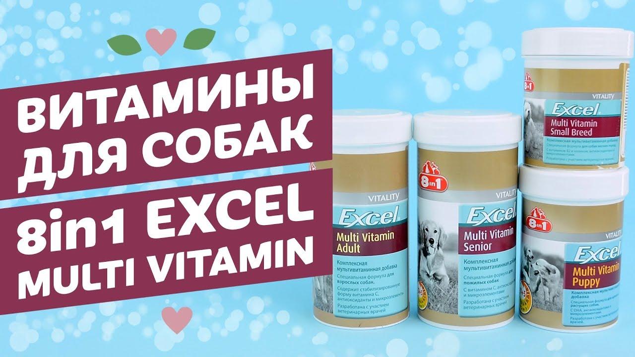 Какие витамины давать беременной чихуахуа 64