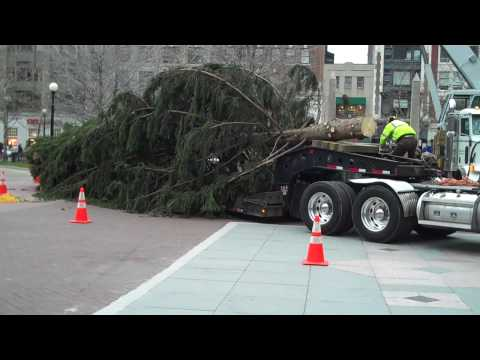 Copley Square Holiday Tree