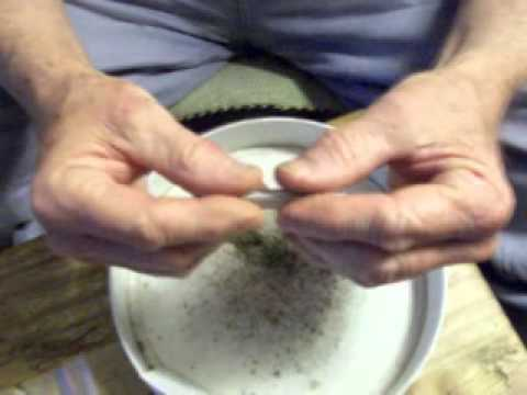 How To Roll A Medical Marijuana Joint - By Richard M. Davis - USA Hemp Museum