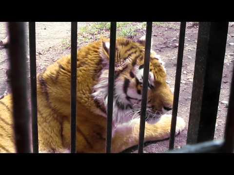 帯広動物園 TATSUO. 2011.5.5