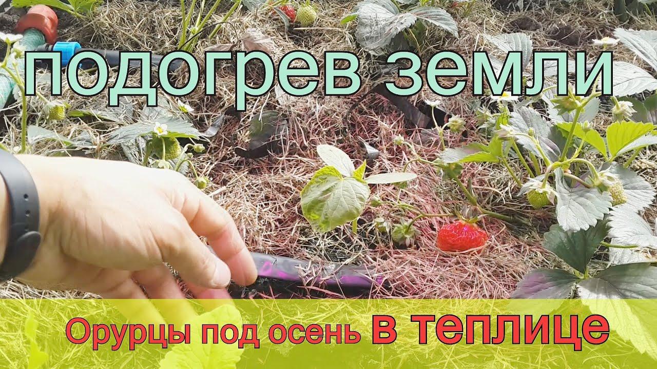 Выращивание огурцов осенью 87