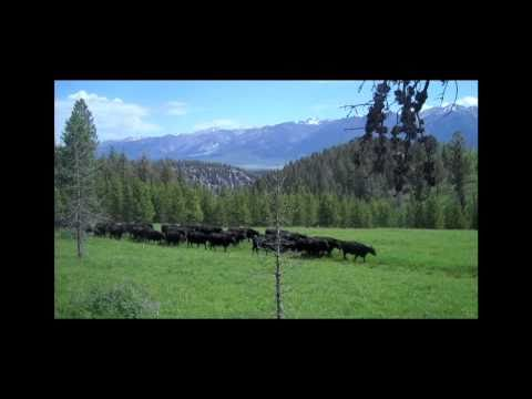 Montana Ranching: Raising Family and Beef (Part One)