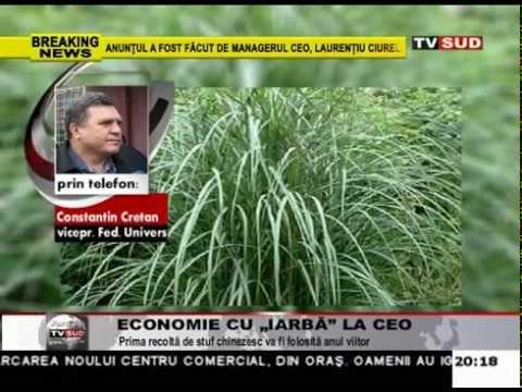 economie cu iarba la ceo