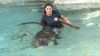 Florida Mom Wrestles Gators, Even at 7 Months Pregnant