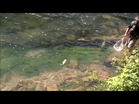 Fly fishing the green river utah youtube for Utah fishing regulations