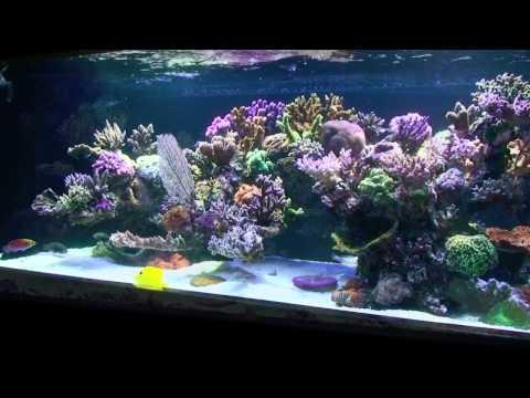 Custom Corner Aquarium