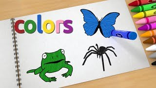 Learn colors with drawings of fruits and animals for kids