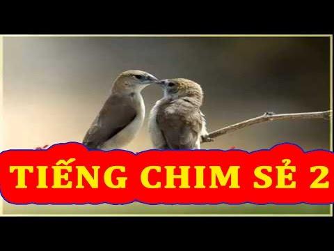Tiếng Chim Sẻ(trích) Kêu Full 2 video