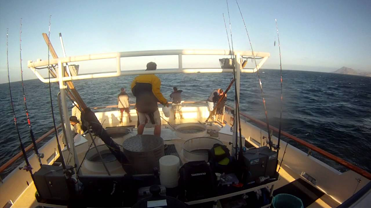 Good drift cedros island fishing media for Point loma sport fishing